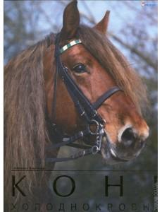 Коні холоднокровні