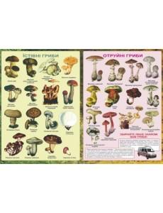 Плакат Їстівні та отруйні гриби.
