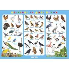 Плакат Свійські та дикі птахи
