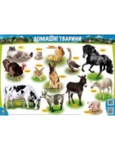 Плакат Домашні тварини А1