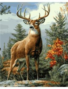 Картина номерах VA-2070 Величний олень, розміром 40х50 см